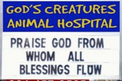 God's Creatures Animal Hospital