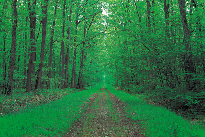 green forest with straight path