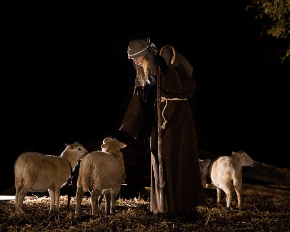 Shepherd and sheep in nativity
