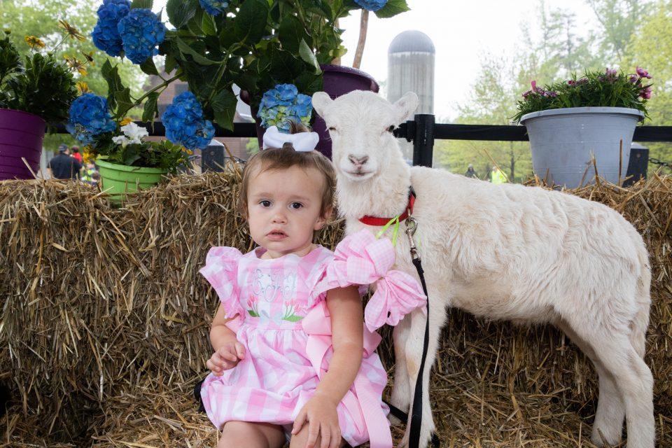 Toddler posing with a lamb