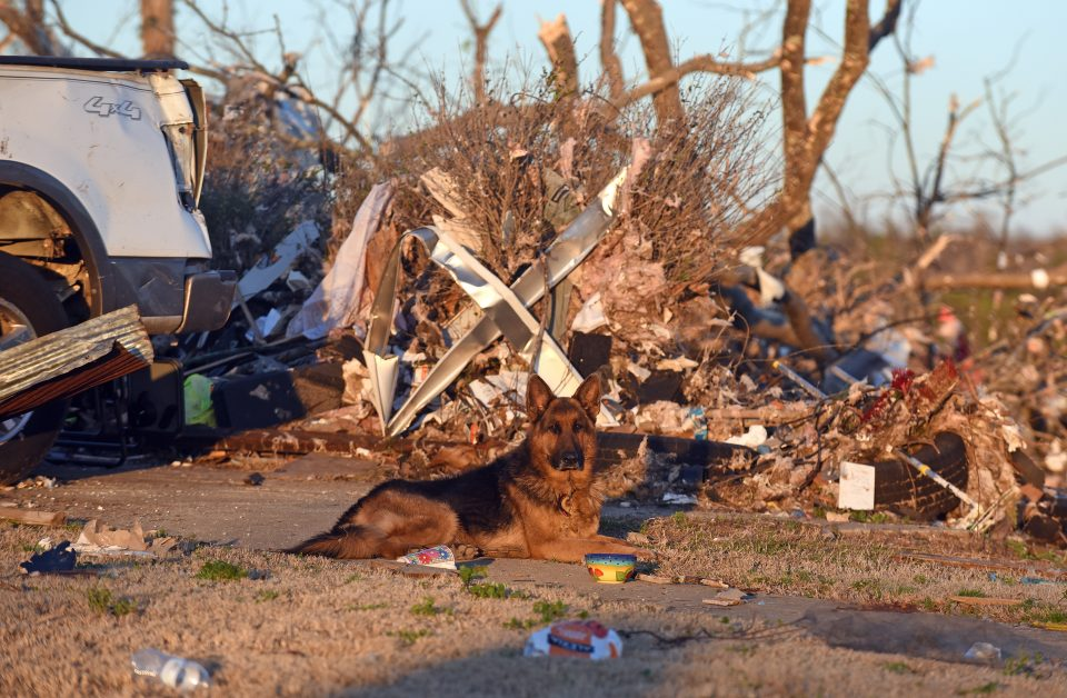 Dog sits in front of tornado devastation