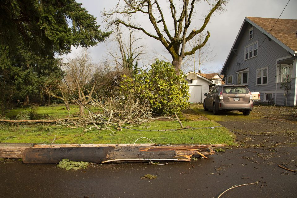 Yard full of downed trees and debris