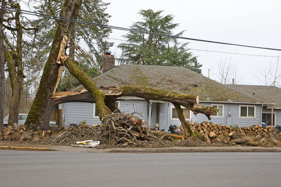 large tree split in front of house, branches on ground