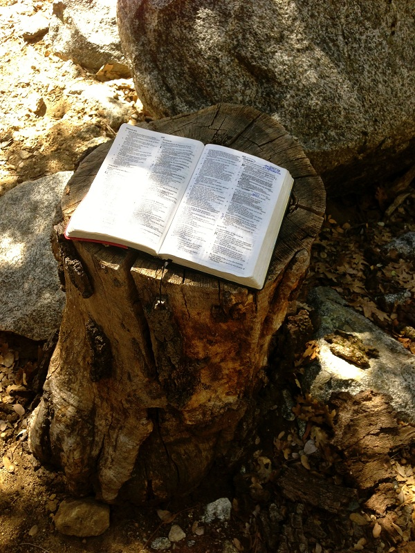 Forest Home Bible on Tree Stump small