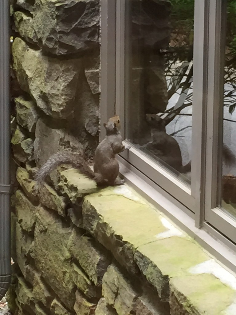squirrel with Wil May 2015