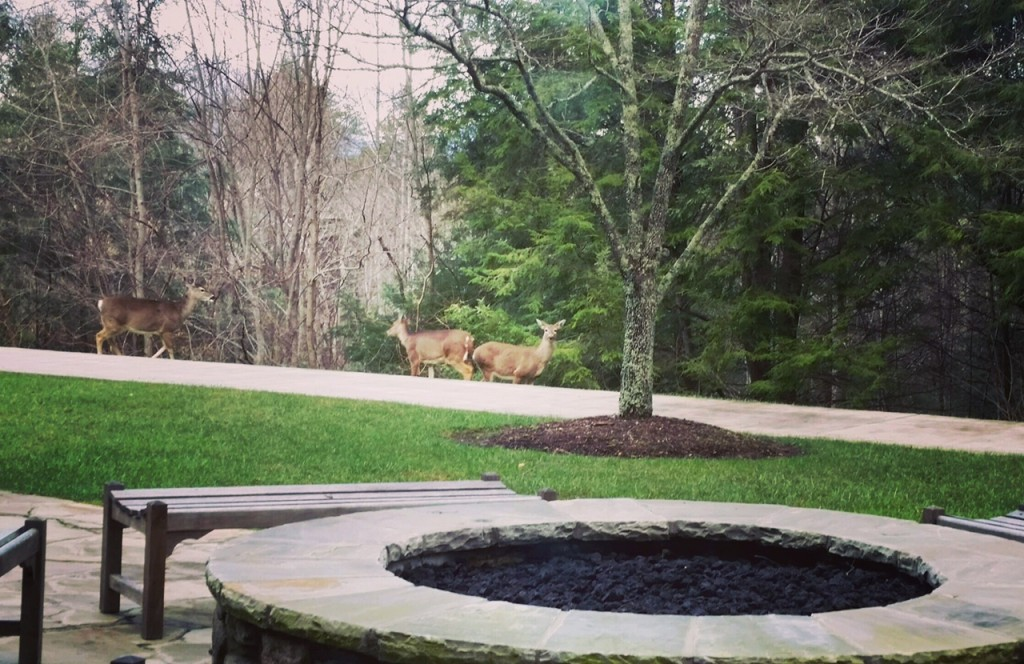 deer by firepit Feb 2016