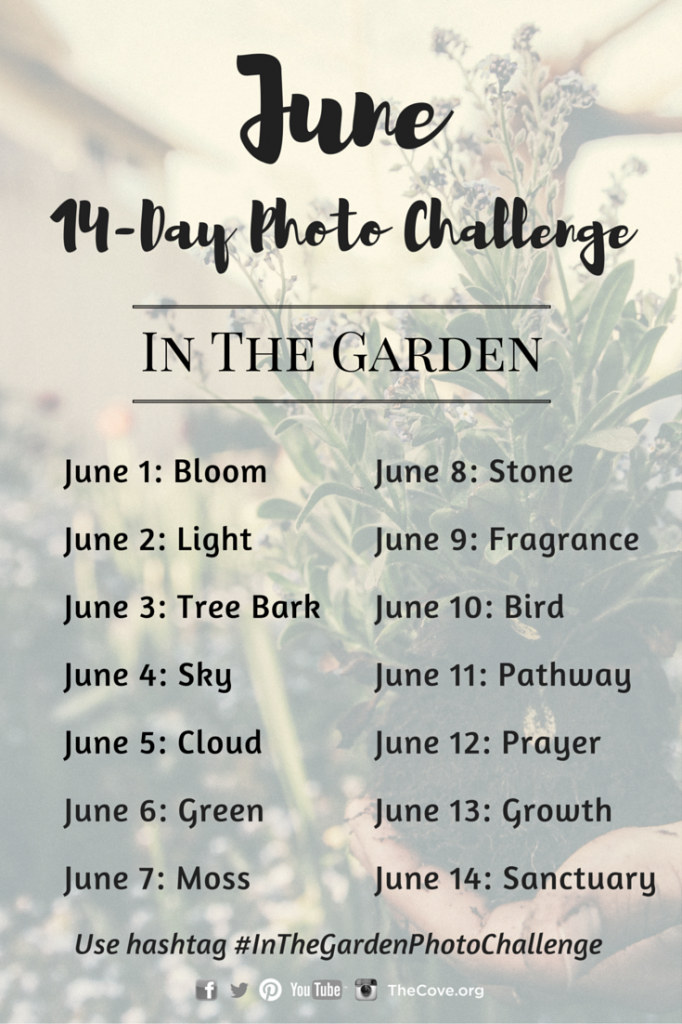14 Day June Photo Challenge Pinterest and Blog