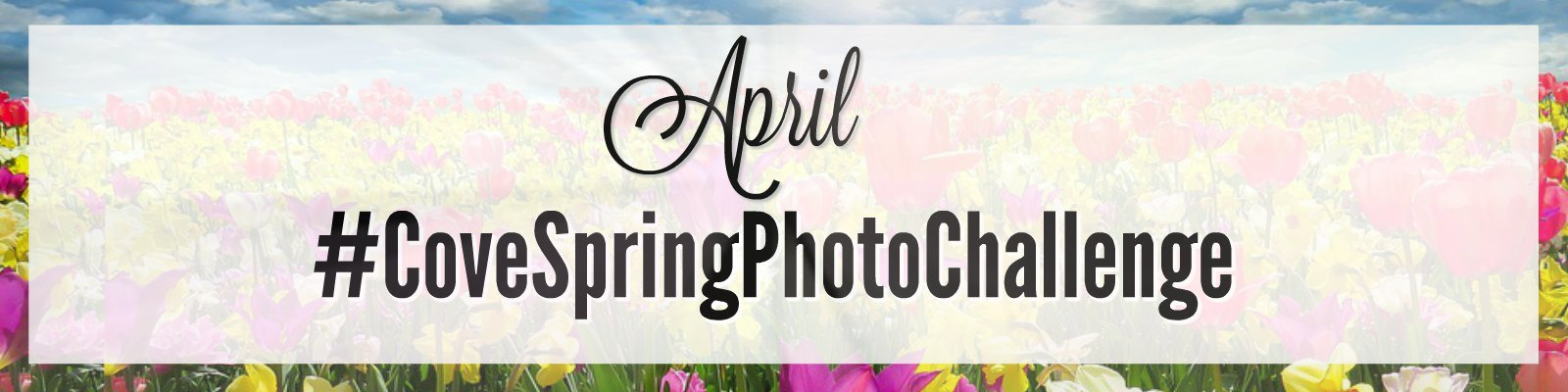 Spring Photo Challenge Blog Header