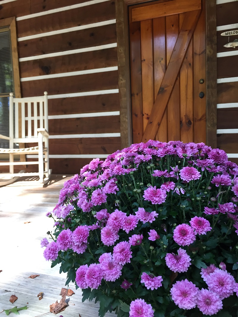 Mums and rocking chairs at cabin 3