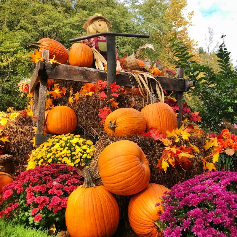 Pumpkin Spice (Loads of Pumpkins)