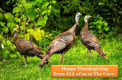 Happy Thanksgiving small
