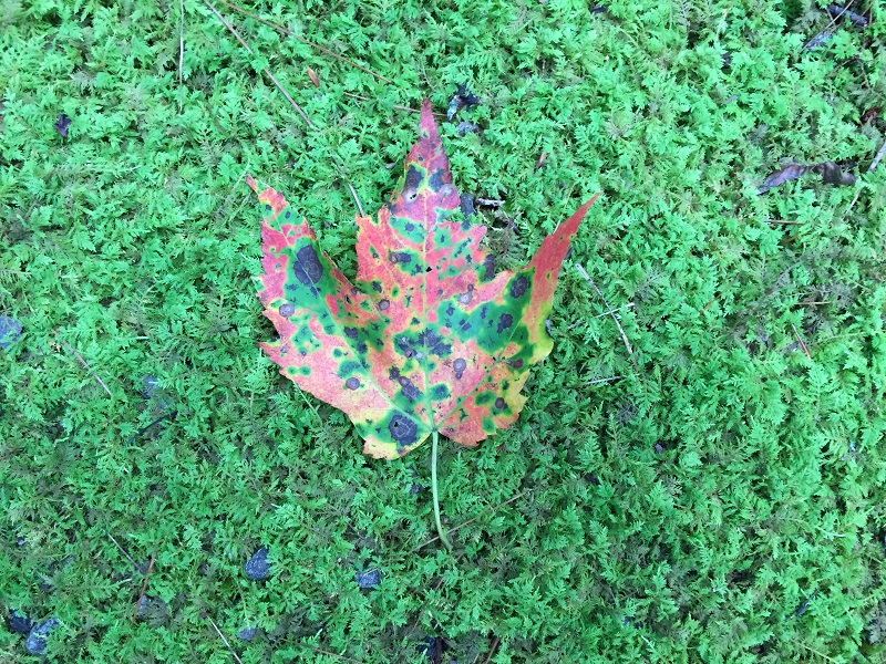 Tradition_9-7(Leaf on moss)(small)